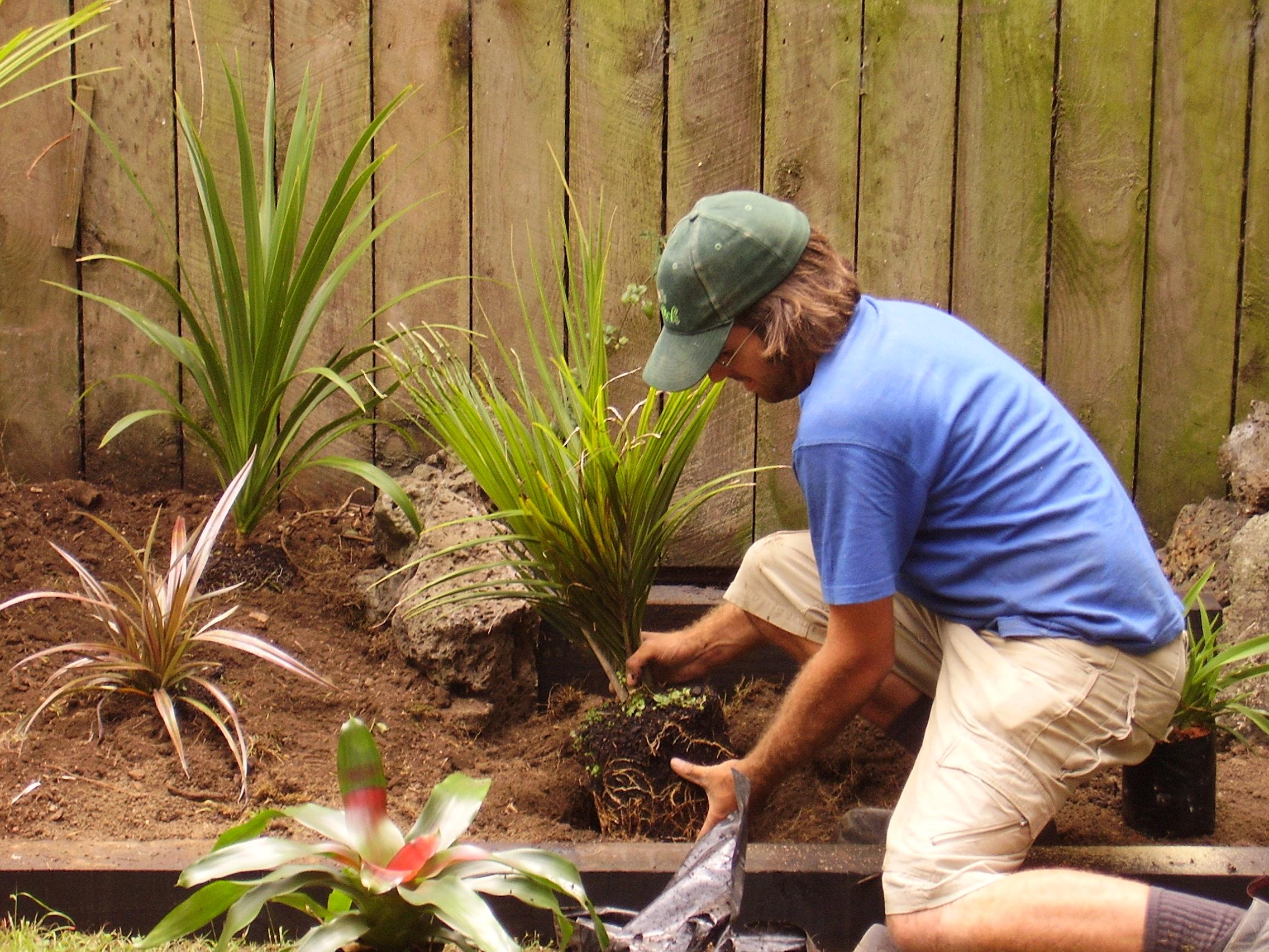 Garden maintenance bi auckland garden ftempo for Auckland landscaping services